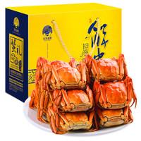 京东PLUS会员、限地区 : 姑苏渔歌 六月黄 阳澄湖大闸蟹  2.0-2.5两*8只