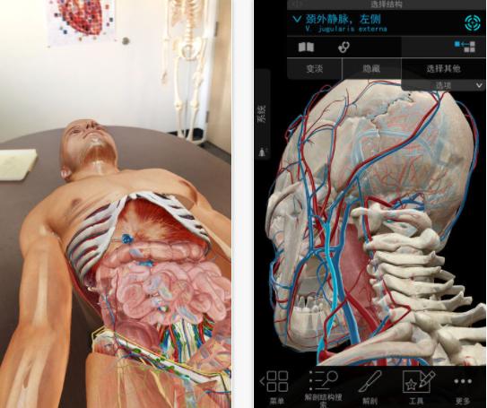 2018版人体解剖学图谱是针对医疗保健专业人士,学生和教师的三维化
