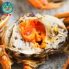 10点开始、前10分钟:固城湖螃蟹大闸蟹全母2.5鲜活螃蟹礼盒团购 88元
