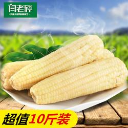 闫老碎 新鲜甜糯玉米 10斤