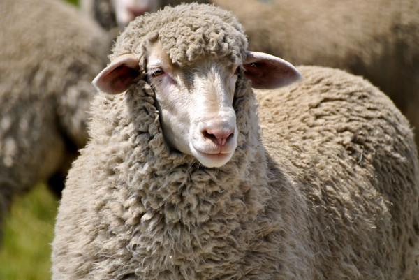 被忽视的传统物料,一件毛衣仍然让你舒适过冬