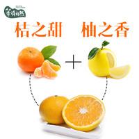 等待自然桔柚建阳 甜桔柚 新鲜水果柚子桔子橙子杂交产品买一送一