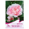 花仙子 粉煦茶花凤仙 粉色 花卉种子  20粒/袋 *11件 12元(需用券)