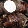 源晨 新鲜桂林 荔浦槟榔芋头 5斤 单个重500-1500g 19.9元包邮(需用券)